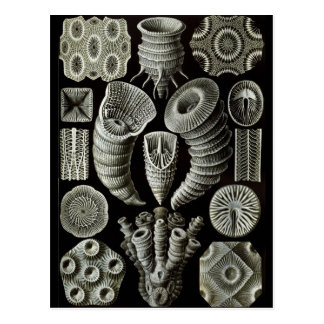 Haeckel Negative Postcard
