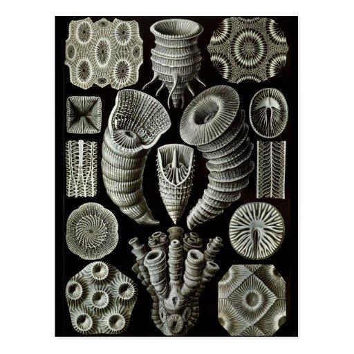 Haeckel Negative Postcards