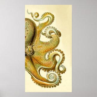 Haeckel Octopus Diptych I Poster