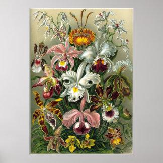 Haeckel Orchids Print