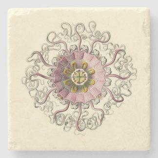 Haeckel Peromedusa Coaster
