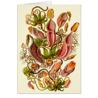 Haeckel Pitcher Plant Illustration  All-Occasion Card