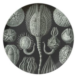 Haeckel Plate