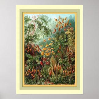 Haeckel's Kunstformen der Nature  12 x 16 Poster
