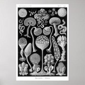 Haeckel s Mycetozoa Posters