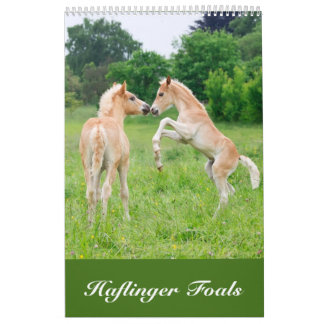 Haflinger Foals 2017 Calendars