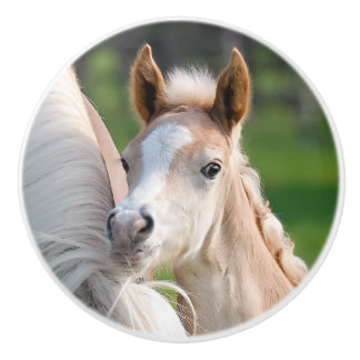 Haflinger Horse Cute Baby Foal Animal Photo on - Ceramic Knob