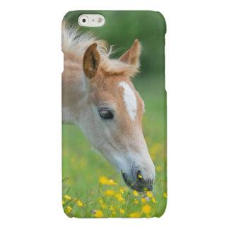 Haflinger horse cute foal