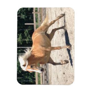 Haflinger Horse Magnet