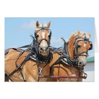 Haflinger Horses Card