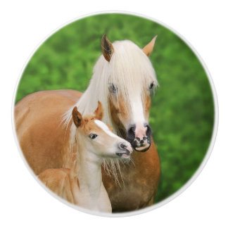 Haflinger Horses Cute Foal Kiss Mum - Decorative Ceramic Knob