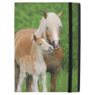 Haflinger Horses Cute Foal Kiss Mum Photo  protect