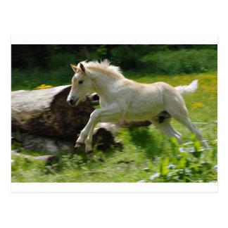 Haflinger Pony Postcard