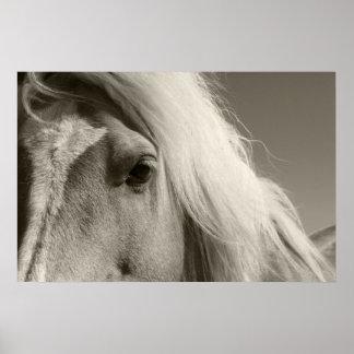 Haflinger portrait - Horse - cheval Print