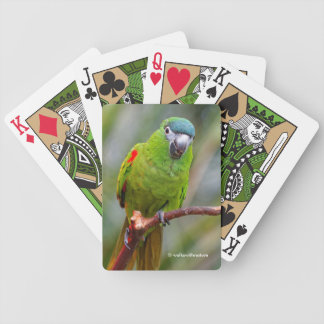 Hahn's Mini Macaw / Red-Shouldered Macaw Bicycle Playing Cards