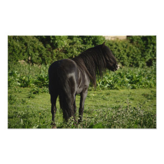 Hairy Horse Photo