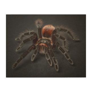 Hairy tarantula spider wood wall art