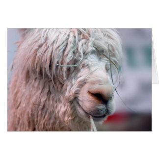 Hairy the Alpaca Card