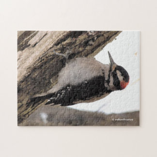 Hairy Woodpecker Working the Wood Jigsaw Puzzle
