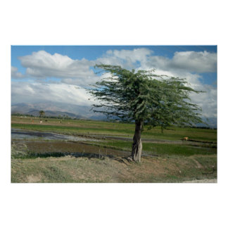 Haitian Countryside 2 Poster