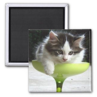 Half Full (Kitten) Magnet