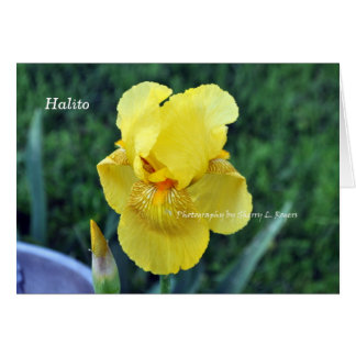"""Halito"" Choctaw Iris greeting Card"