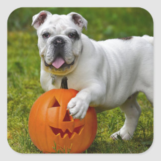 Halloween bulldog square sticker
