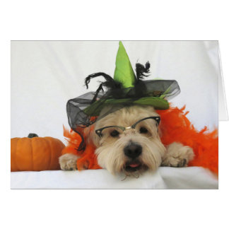 halloween card, humor, dog cute, witch,pumpkin, card