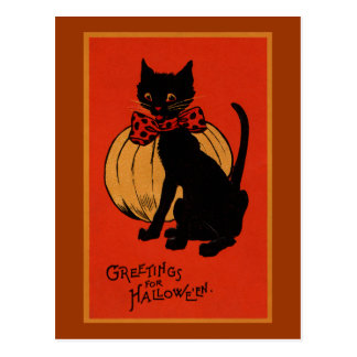Halloween Cat and Pumpkin Postcard