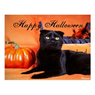 Halloween Cat Postcard