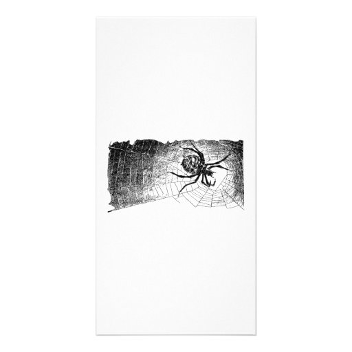 Halloween Spider on Web Picture Card