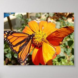 Hal's Butterflies Poster