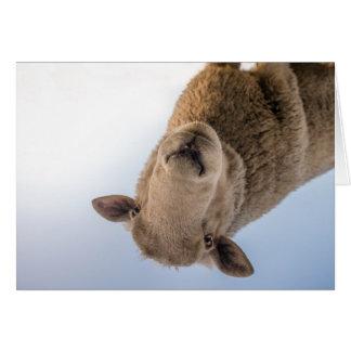 HAMbWG - Greeting Card - Sheep