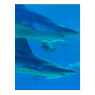 Hammerhead Sharks Postcard