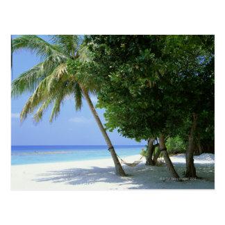 Hammock and Palm Tree Postcard
