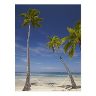 Hammock and palm trees Plantation Island Resort Postcard