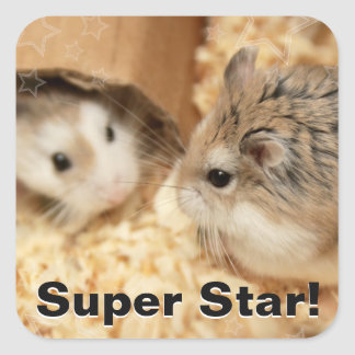 Hammyville - Cute Hamster Square Sticker