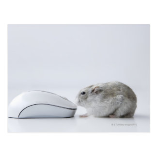 Hamster and Computer mouse Postcard