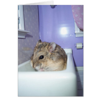 Hamster Bath Card