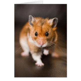 Hamster Card