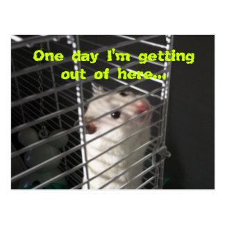 Hamster Escape Postcard