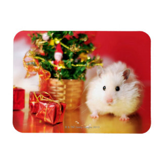 Hamster Kokolinka with Christmas tree Rectangular Photo Magnet