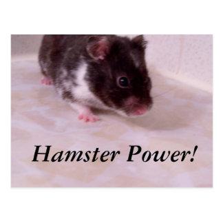 Hamster power Noah, Hamster Power! Postcard