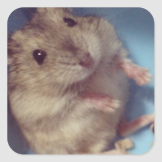 Hamster Square Sticker
