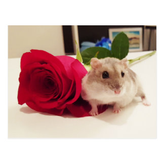 Hamster With a Rose Postcard