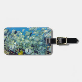 Hanauma Bay - Hawaii Convict Tangs Luggage Tag