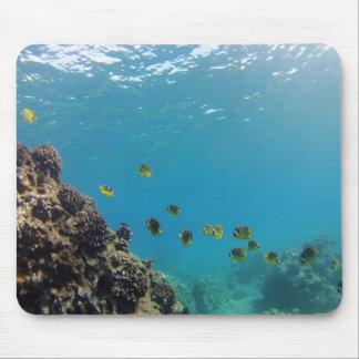 Hanauma Bay Hawaii - Raccoon Butterfly Fish Mouse Pad