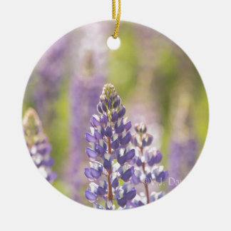 Hancock County Lupines .jpg Ceramic Ornament