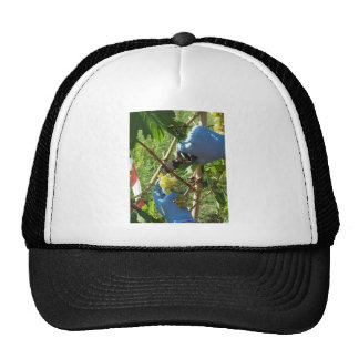 Hand cutting white grapes, harvest time cap