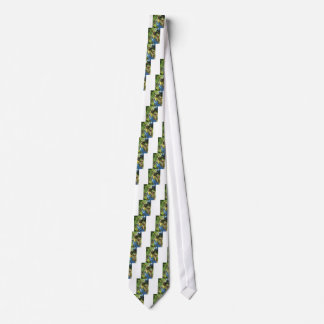 Hand cutting white grapes, harvest time tie